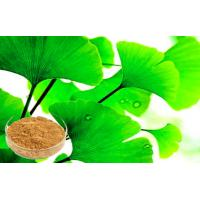 Quality Pure Ginkgo Biloba Powder , Ginkgo Biloba Extract Bright yellow-brown, powder or friable mass for sale