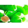 Buy cheap Pure Ginkgo Biloba Powder , Ginkgo Biloba Extract Bright yellow-brown, powder or from wholesalers