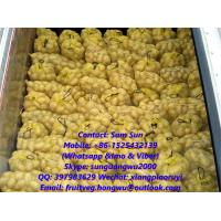 Quality China Fresh Holland Potato from the farm for Oversea Market for sale