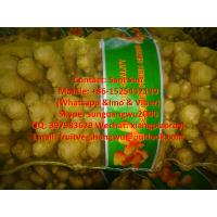 Quality Fresh Ginger to Pakistan Market for sale