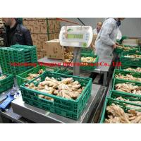 Quality Organic ginger/Organic dried Ginger in the Germany Market for sale
