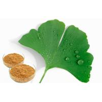 Quality Food Supplement Ginkgo Biloba Leaf Extract With GCAP Planting Base for sale