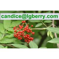 Quality Fruit blend 100% pure elderberry fruit powder for sale