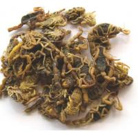 China Traditional chinese medicine,Quan Xie (Scorpion)/dry Scorpion on sale