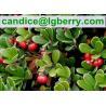 Buy cheap Alpha arbutin, Beta arbutin/100% Natural arbutin from wholesalers