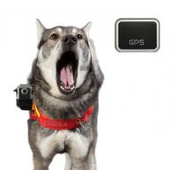 Quality Dog Camera Vest with 16MP HD 1080p GPS Waterproof Stealth Camera (HDV-560) for sale