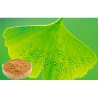 Quality Light Brownish Yellow Ginkgo Biloba Leaf Extract 24% Flavone / 6%Lactone for sale