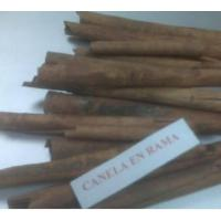 Quality Chinese Cinnamon Whole for sale