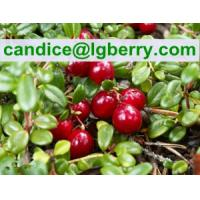 Quality 12 years factory supply 5%-70% Cranberry Anthocyanin for sale