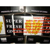 Quality Fresh Ginger to Saudi Market for sale