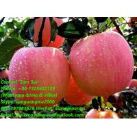 Quality Fresh Fuji Apples for sale