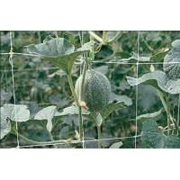 Quality Climbing Plant Support Netting Green / White For Greenhouse , Garden for sale