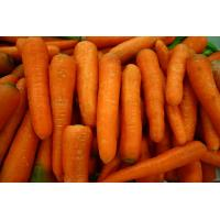 Quality Fresh carrot, frozen carrot, China vegetable, yellow big size for sale