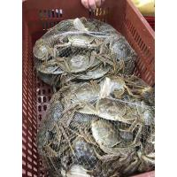Quality Supermarket Mesh Sleeve Plastic Tube Netting PE + PP Material For Crab for sale