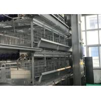 Quality High Strenghth Automatic Poultry Feeder System Health Long Service Life for sale