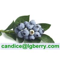 Quality (HACCP) 100% Pure Natural Blueberry Pterostilbene for sale