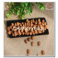 Best Fresh bulk raw bitter apricot seeds type in apricot kernels and apricot nut for sale in 2016 wholesale