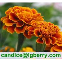 Quality Marigold extract lutein 5% 10% 20% 80% for sale