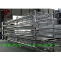 Quality Conveyor Belt  Automatic Manure Removal System Convenience ISO9001 Approved for sale
