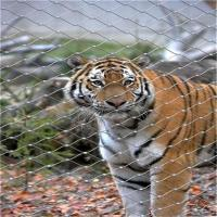 Best Stainless Steel X-Tend Mesh For Tiger Mesh,Zoo Animal Enclosure Fence wholesale