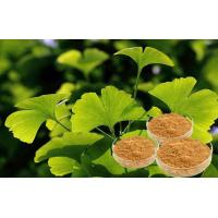 Quality Standardization of Production USP40 Biloba Leaf Extract , Ginkgo Biloba Natural Powder for sale