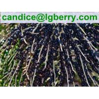 Quality Natural Acai Berry Extract 5%-70%Anthocyanin/acai berry extract for sale