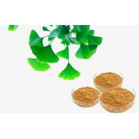 Quality Pharmaceutical Natural Botanical Ginkgo Extracts For improving mental performance for sale