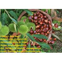Quality China Fresh Chestnut for sale