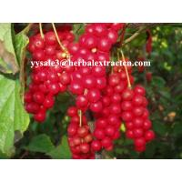 China Schisandra P.E. Brown yellow fine powder, NATURAL liver protection, Anti-knub, Schisandrins 2%,5%,9% on sale