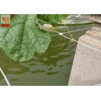 Quality PP Materials Plant Climbing Netting Insect Barrier Netting 3.0M Wide for sale
