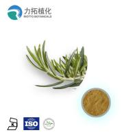 Quality 1. GMP Manufacture Rosemary Extract Rosmarinus officinalis for sale