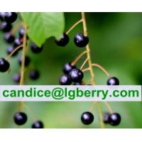 Quality High Quality Prunus Padus Extract for sale