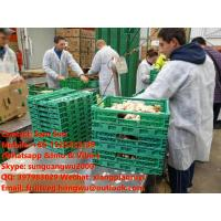 Quality China Organic Ginger for sale