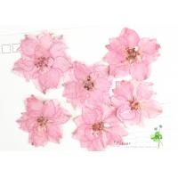 Buy Eternal Floral Dried Pressed Flowers Larkspur Diameter 3CM For Christmas Decorations at wholesale prices