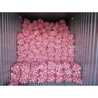 Quality Fresh dark red onion, organic Chinese rose peeled onion, frozen vegetable, medium size for sale