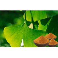 Quality EP9.0 Natural Botanical Ginkgo Extracts With Advanced Extraction Technology for sale