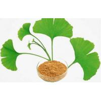 Quality High Purity Ginkgo Biloba Extract Powder With Low Pesticide Residue for sale