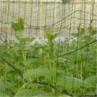 Quality Trellis Netting Roll / Garden Plant Climbing Nets Support for sale