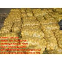 Quality Fresh Holland Potato from the farm  for exporting for sale