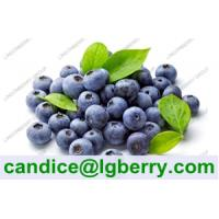 Quality Blueberry P.E /Anthocyanin 5%-70%/wild blueberry for sale
