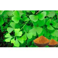 Quality Natural Nutrition Ginkgo Biloba For Helping Improve Memory CEP,GACP Certificated for sale