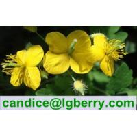 Quality Gmp factory supplier of Celandine Extract Chelidonine for sale