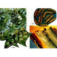 Quality Amur Corktree Bark Extract for sale