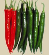 Quality PEPPER EarlyRedChili for sale
