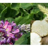 Quality Hot Products Pueraria Mirifica Extract,White Kwao Krua Extract for sale
