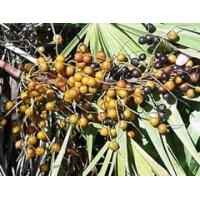 Buy Hot Products Saw Palmetto Berry Extract at wholesale prices