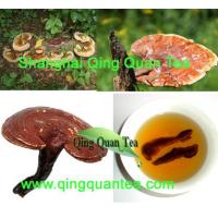 Quality wild lingzhi herbal tea for sale