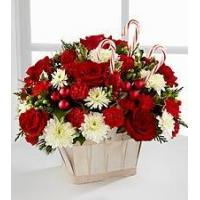 Quality Red Carnation NO.51 shanghai flower delivery for sale