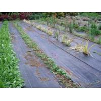 Quality Ground Cover Net for sale