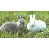 Buy cheap Galvanized Rabbit Mesh from wholesalers